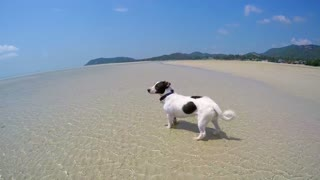 Cute Dog Running on the Beach. Slow Motion.