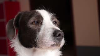 Cute Dog Snout Closeup