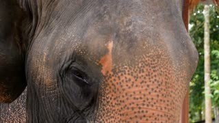 Detailed Portrait of an Elephant. Closeup. Slow Motion.