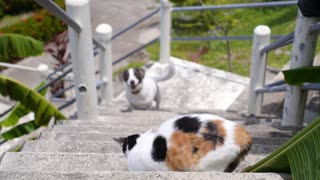 Dog and Cat Quarreling Outdoors