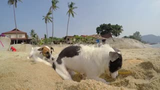 Dog Digging in Sand at Beach in Summer