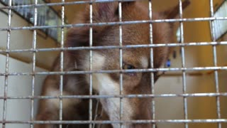 Dog in Cage. Cruelty to Animals and Animal Abuse