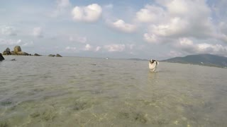 Dog Running in Sea Water on Beach. Slow Motion