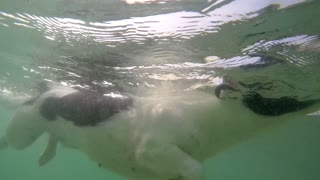 Dog Swimming Underwater in Summer. Slow Motion.