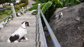 Dog Watching Cat Outdoors in Summer. Funny Animal