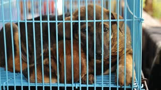 Dogs Abandoned and Homeless in Cage in Shelter