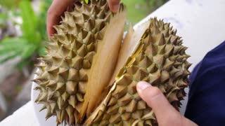 Exotic Tropical Fruit Durian Closeup