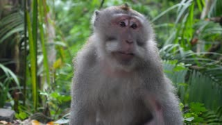 Funny Animal Monkey Sitting in Green Forest