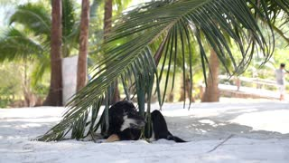 Funny Dog Relaxing Under Palm Tree on Beach