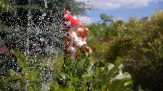 Garden Dwarf near Fountain in Green Home Garden