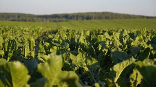 Green Field with Organic Plants in Soil