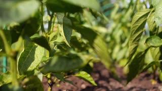 Green Organic Plants Growing in Soil under Sunshine