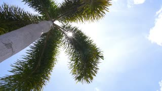 Green Palm Tree against Blue Sunny Sky on Island