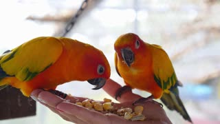 Hand Holding and Feeding Parrots - Animal Care Concept