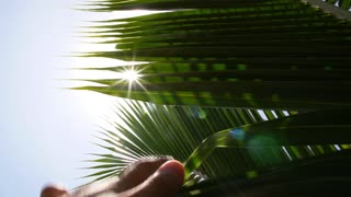 Hand Reaching Sun through Palm Leaves. Slow Motion.
