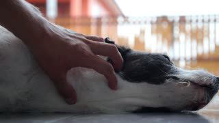 Hand Stroking the Dog Outdoors