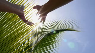 Hands Holding the Sun against Blue Sky and Green Palm Leaves. Slow Motion.
