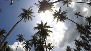 Happy Summer Vacation - Palm Trees against Blue Sky. Time Lapse.