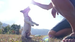 Jack Russel Terrier Playing Outdoor with Owner. Slow Motion.