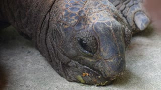 Сlose Up on Face of Turtle