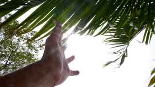 Male Hand Playing with Sun through Palm Leaves. Slow Motion.