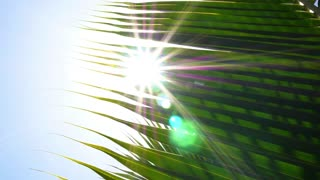 Male Hand Touching Palm Leaf with Sun. Slow Motion.