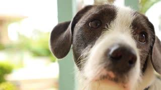 Man's best friend. Cute Dog Outdoors. Close up.