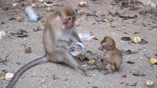 Monkey Family Eating Peanuts in Thailand Park