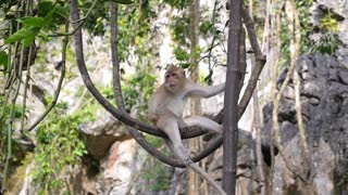 Monkey in Tree in Jungle