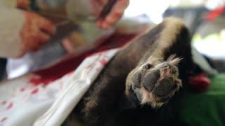 Neutering of Dog in Animal Veterinary Clinic