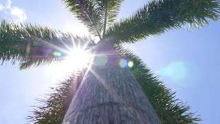 Palm Tree in Blue Sunny Sky. Slow Motion.