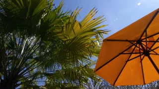 Palm Trees and Sunshade Umbrella on Tropical Beach