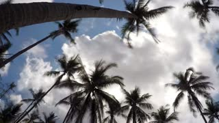 Palm Trees in the Blue Sunny Sky. Timelapse.