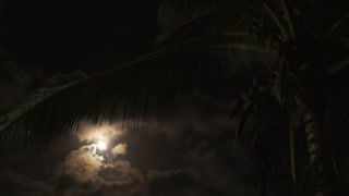 Palm with Coconuts and Full Moon on Night Sky. Speed up.