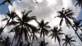 Palms against Blue Sky at Exotic Tropical Island