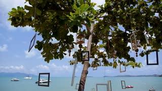 Piece of Art on Lonely Tree on Beach in Sunshine near Sea