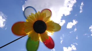 Rainbow Flower with Multi Colored Petals Against Blue Sky