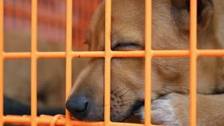 Sad Homeless Dog in Cage in Shelter
