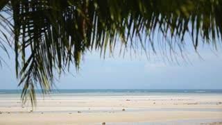 Sandy Beach through Palm Leaves.