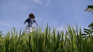 Scarecrow on Green Rice Field against Blue Sky