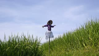 Scarecrow on Green Rice Field on Bali Rice Terraces