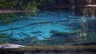 Serene Pond with Clear Blue Water in Tropical Forest
