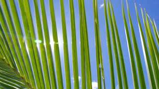 Sun Over Green Palm Leaves against Blue Sky