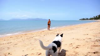 Tanned Man and Cute Dog Playing on Seacoast in Tropical Thailand.