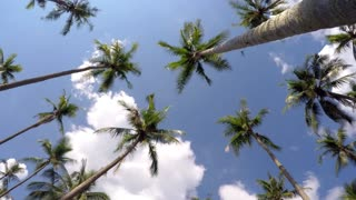 Time Lapse of Coconut Palm Trees against Beautiful Holiday Sky