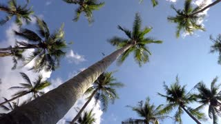 Tropical Beach with Coconut Palm Trees against Blue Sky. Timelapse