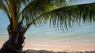Tropical Beach with Palm and Sea - Vacation and Peace