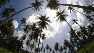 Tropical Destination with Palm Trees on the Blue Sky. Timelapse.