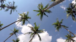 Tropical Jungle Palm Trees against Blue Vacation Sky. Time Lapse