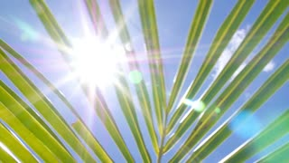 Tropical Palm Tree Leaf in Blue Sunny Sky